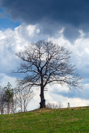 Tree before storm in Plana Mountain,  Sofia Province, Bulgaria