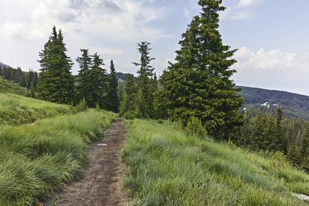 Sommerlandschaft des Vitosha-Gebirges, Stadtregion Sofia, Bulgarien
