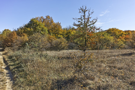 Autumn panorama of Cherna Gora (Monte Negro) mountain, Pernik Region, Bulgaria Reklamní fotografie