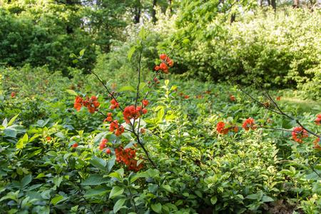 behalf: plants in the Main Botanical Garden behalf of Tsitsin Stock Photo