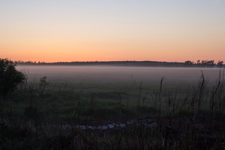 composure: field and forest in mist at sunset