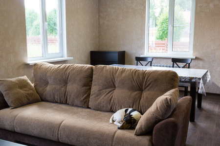interrior: dog sleeps on the couch in the living room of a country house Stock Photo