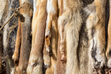 pelage: pelts of fur animals hang on a rope