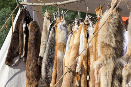 furskin: pelts of fur animals hang on a rope