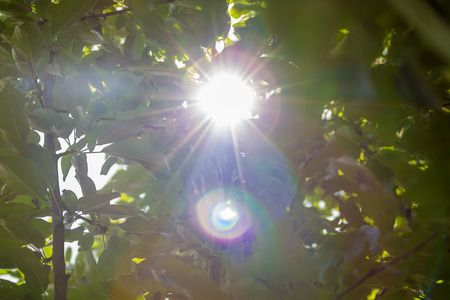 overtone: solar lens flare and sunlight spots through foliage