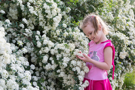 admires: little girl with pigtails admires bush strewn with white flowers