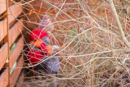 bare branches of a bush hide little girl