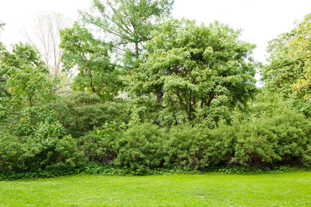 shrubs: lawn shrubs and trees in the park