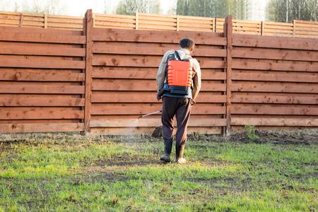 knapsack: man sprays grass with herbicide of knapsack sprayer