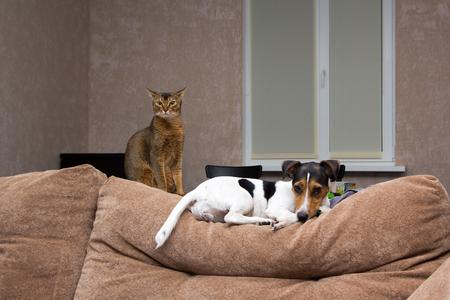 position d amour: chien et chat sur le dos du canapé Banque d'images