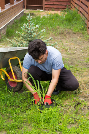 forestation: man plants a daylily in a garden Stock Photo