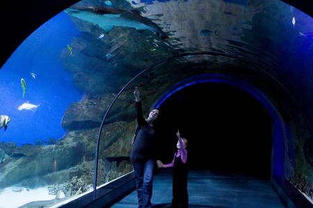 fish tank: Mom shows daughter fish in an aquarium Stock Photo