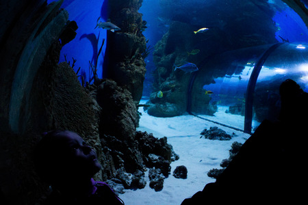 fish tank: little girl looks at fish in an aquarium Stock Photo