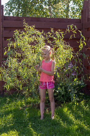girl looks at the leaves on the young willow