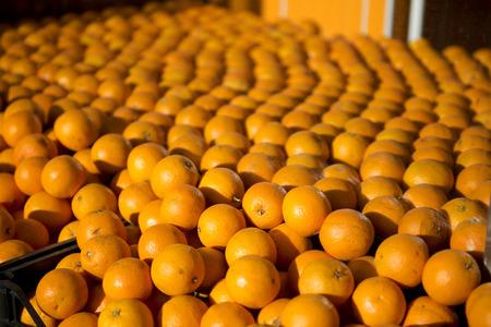 greengrocer: Oranges in a greengrocer in Kadikoy,Istanbul,Turkey