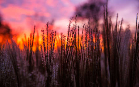 saturated: Red purple sunrise sunset and grass