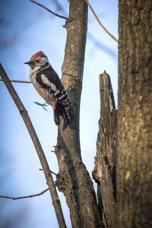 Cute woodpecker on the branch