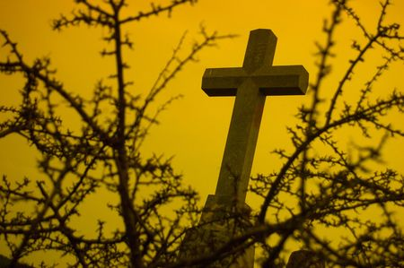 thorn bush: A Religious symbol behind a bush of thorns