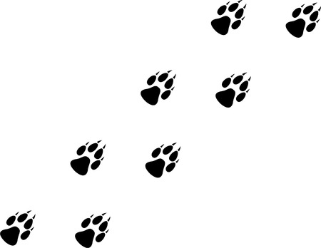 animal tracks: A Wolf paw Trail Illustration Illustration
