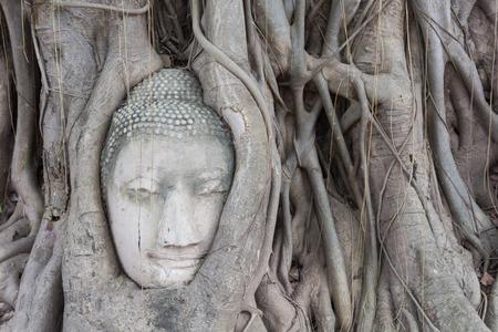 cabeza de buda: �rbol viejo con el cabeza de Buda en Ayutthaya, Tailandia.
