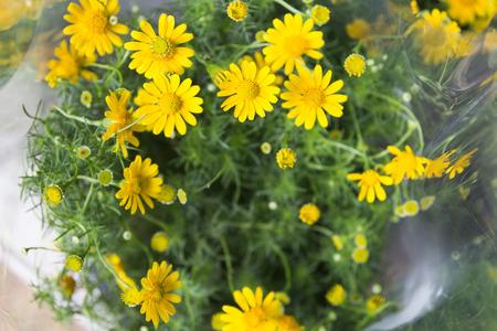 shasta daisy: Close up of daisy blossoms. Stock Photo