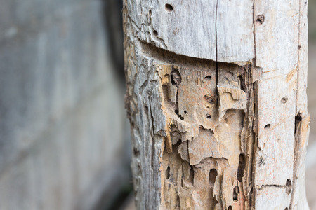 traces: Traces of termites eat on old wood.