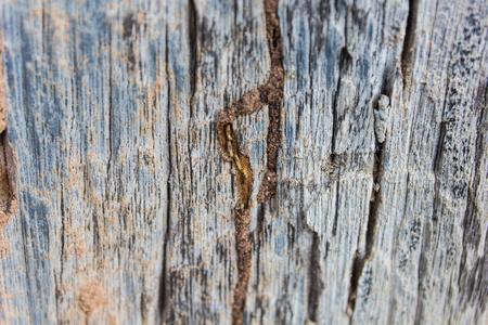 drywood: Traces of termites eat on old wood.