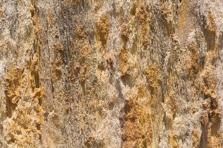 face in tree bark: The Petrified Wood Texture Background, Close up. Stock Photo