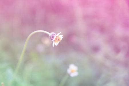 soft colors: Beautiful wild flowers with softness focus color filters background. Stock Photo