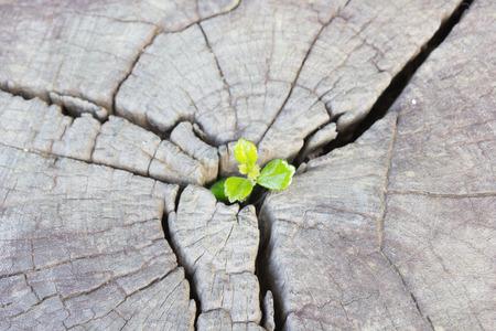 Planta de semillero que crece en el tronco central como un concepto de nueva vida y un nuevo desarrollo y la renovación como un concepto de negocio de éxito en el liderazgo emergente.
