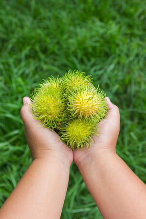 youngs: Rambutan on youngs hand in the garden.
