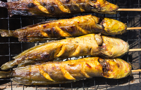 catfish: Catfish Grill On charcoal grill(Thai Food).