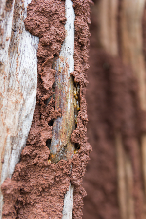 Traces of termites eat on old wood.