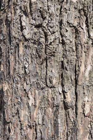 木目のクローズ アップ。