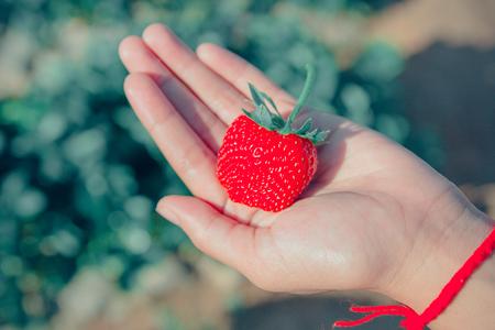 子供に熟したイチゴはイチゴ農家を手します。 写真素材