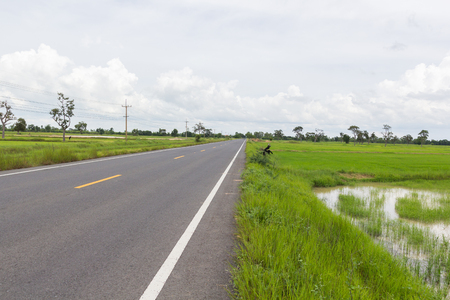 Rural road to village and green rice.