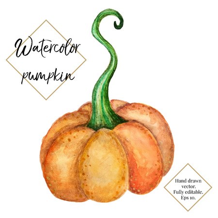 Vector watercolor pumpkin isolated on white background. Hand painted, hand drawn vegetable. Halloween, thanksgiving, autumn illustration for cards, label, invitation, web design.