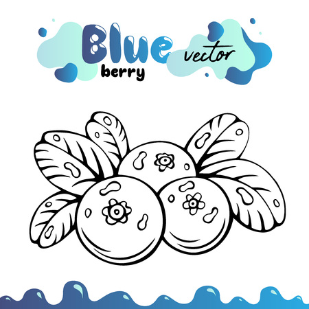 Blueberry vector illustration, berries images. Isolated blueberry vector illustration for menu, package design. Sketch blueberry berries images. Isolated blueberry vector illustration, berries images