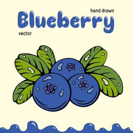 Blueberry vector illustration, berries images. Doodle Blueberry vector illustration in blue and green color. Blueberry berries images for menu, package design. Vector berries images of blueberry