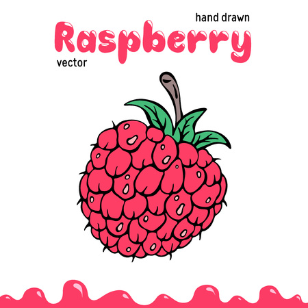 Raspberry vector illustration, berry clipart. Cartoon raspberry vector illustration for logo, design. Colored raspberry vector illustration for menu, package. Doodle berry clipart, raspberry isolated