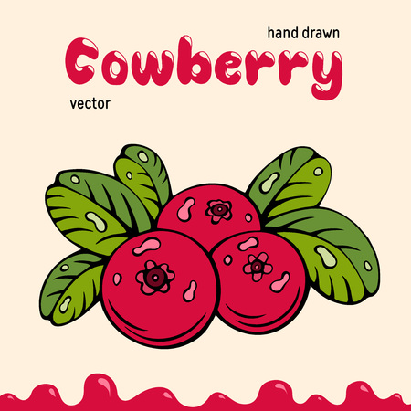 Cowberry vector illustration, berries images. Doodle cowberry vector illustration in red and green color. Cowberry berries images for menu, package design. Vector berries images of cowberry Ilustração