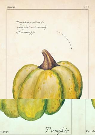 Cucurbita, gourd watercolor illustration. Cucurbita, gourd, pumpkin isolated watercolor illustration. Cucurbita, gourd, pumpkin for card, menu, invitation. Watercolor illustration of green Cucurbita
