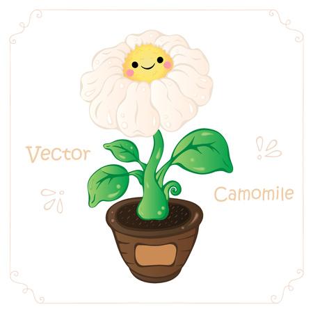 Camomile, daisy flower vector.