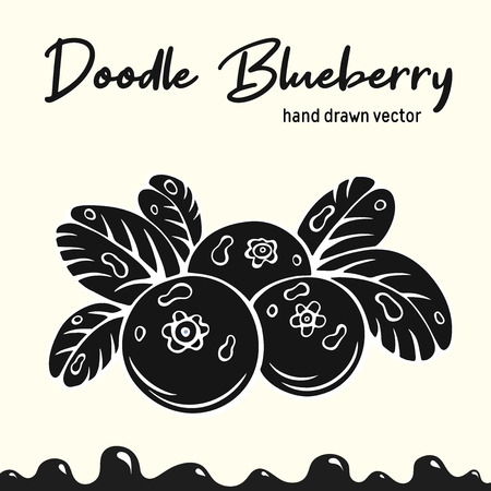 Blueberry vector illustration, berries images.