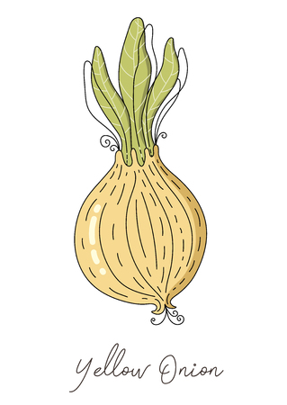 Onion isolated vector.