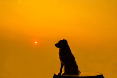 puta: Perro que se sienta en una plataforma de observaci�n de la puesta de sol que es mucho.