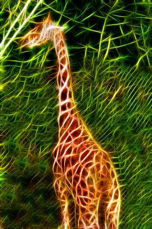 camelopardalis: giraffe illustration. Beautiful digital drawing of a giraffe. Fractal digital fantasy art of a giraffe.