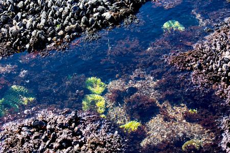 Tide Pool aan de kust van Oregon Stockfoto