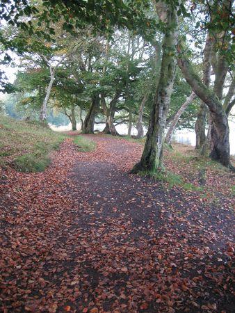 autumn path Stock fotó