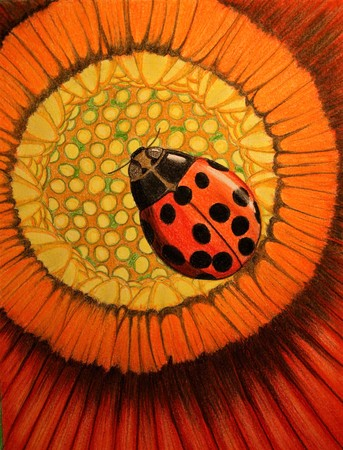 Lady Bug On A Red Flower Art